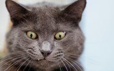 """""""Pissaa vaan rauhassa, minä tässä vain tuijotan"""" - mitä kissasi sanoisi sinulle jos osaisi?"""