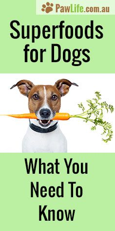 How to make homemade food for dogs pinterest homemade dog food how to make homemade food for dogs pinterest homemade dog food homemade dog and dog food forumfinder Images