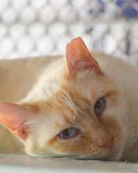 Give Cats Rescued from Cruelty a Home  Read more at https://greatergood.com/project/#3fLj98BpSTH8cAwz.99