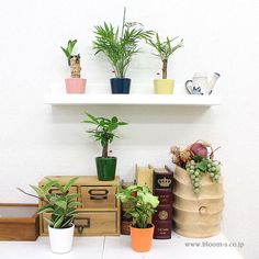 いろんな場所に置けてカラフルな陶器に入ったミニ観葉植物。粘土を1200度位の熱で発泡させたハイドロボール(レカトン)で植えられているため、虫もわきにくくお手入れ簡単な観葉植物です。 #観葉植物 #ミニ観葉植物 #インテリア #foliageplant #interior #plants #mini http://www.bloom-s.co.jp/fs/bloomingscape/hy-ht73