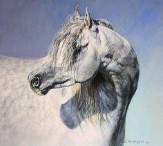 Arabian Stallion Limited Edition Horse Print by Artist Judi Kent Pyrah