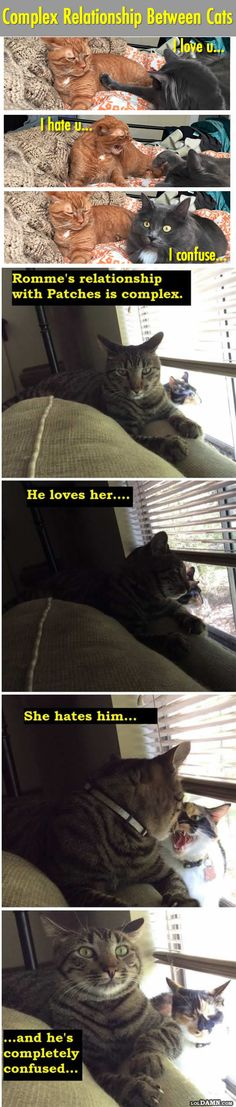 Love, Hate And Confused: Complicated Relationship Of Cats.