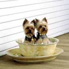 Adorable doggies!