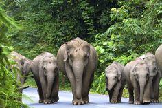 Lua de mel na Tailândia. #casamento #luademel #viagem #noivos #Tailândia #elefantes