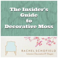 The Insider's Guide to Decorative Moss