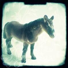 Little horse: 5 x 5 inch signed photograph of a toy horse £8.00