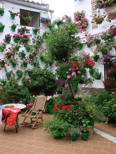 Courtyard of Flower Pots
