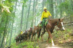 Wildfire West | Wildland Firefighting Pictorial Book