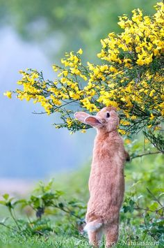 Bunny smells flower