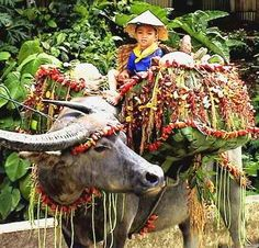 Pulilans Carabao Festival of Bulacan, Philippines (1) From: Uploaded by user, no url