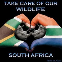 White people pay Afrikans so much money to kill our own animals, when we should be protecting them, no amount of money should change our minds. Rhino Poaching, Clifton Beach, Save The Rhino, Romance, Out Of Africa, Kruger National Park, My Heritage, My Land, Beautiful Creatures