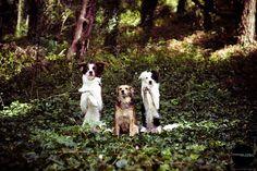 Dog photography in Serra de Sintra - Portugal. Border collies