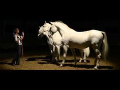 Kappel Edit and her Lippizaner horse stud in Szilvásvárad.   Love and training of the majestic Lippizaner Stallions in Hungary (this still picture is distorted, but the video is fine)