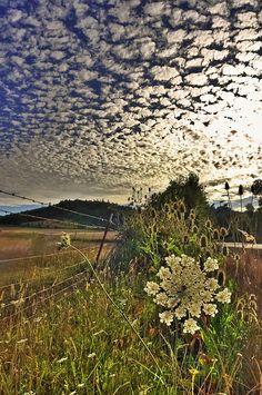 """Clouds Gone Wild"" ~ photo by Tyra O'Bryant  Wow."