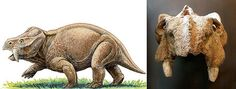 Dicynodonts, not quite dinosaurs but cool all the same!  http://www.dinopit.com