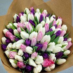 600 × 600 Pixel Source by mariacigarro Tulips Flowers, My Flower, Planting Flowers, Beautiful Flowers, Purple Tulips, Tulpen Arrangements, Floral Arrangements, Unusual Flowers, Colorful Flowers