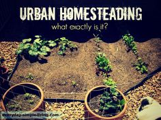 Urban homesteading - what the heck is that?