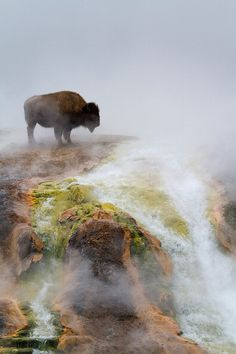 wonderous-world:  Excelsior Bison by Melanie M