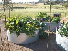 Water trough raised beds in an animal proof enclosure - pretty attractive and very utilitarian.