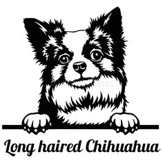 Long Haired Chihuahua, Silhouette Art, Vector Stock, Free Illustrations, Cat Breeds, Tattoo Drawings, Wood Art, Drawing Ideas, Wall Decals