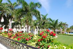The grounds at the Ritz Carlton Rose Hall in Montego Bay #Jamaica are splendid! Agree?