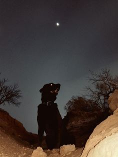The dog slipped beneath the stars. He was black as shadow, and the only indication he was there was the suggestion of moment. A dark ripple curving around a boulder or sliding soundlessly through a swatch of tall, pale grass. Puppy Biting, Werewolf, Dark Art, Art Inspo, Art Reference, Creepy, Cute Animals, Creatures, Puppies
