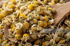 Stock Photo : Dried chamomile