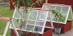 Shine The Light, She Sheds, Terrarium, Windows, Handmade, Crafts, Home, Blog, Terrariums