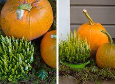Koristekurpitsat Pumpkin, Vegetables, Food, Pumpkins, Essen, Vegetable Recipes, Meals, Squash, Yemek