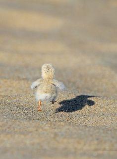 Go little dude go!