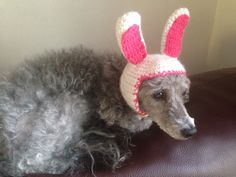 a bunny ear hat for my poodle