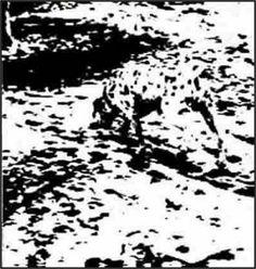 Ilusões de ótica - Descubra as coisas escondidas nas imagens! | Mix Total
