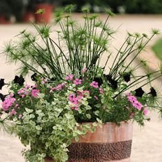 Mixed Container Solutions - Cypress Sensation
