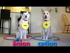 Dogs Teaching Chemistry Move over Chemistry Cat, it's time for dogs to take over. High School Chemistry, Chemistry Lessons, Teaching Chemistry, Science Chemistry, Middle School Science, Physical Science, Science Lessons, Science Education, Science Activities