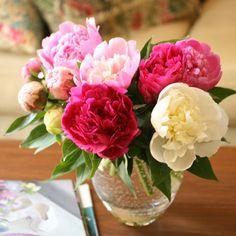 【5/30到着】JA中野市のシャクヤク*10本アソート | 花・花束の通販|青山フラワーマーケット