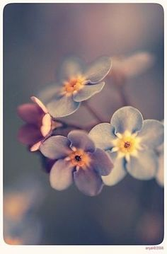 Forget me not - 12 by anjali on deviantART Beautiful Bouquet Of Flowers, Flowers Nature, Pretty Flowers, Small Flowers, Flower Phone Wallpaper, Flower Wallpaper, Nature Wallpaper, Flower Pictures, Nature Pictures