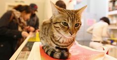 Cats and coffee - i'm there! Coffee shop in Seoul.