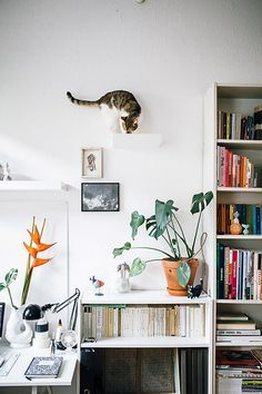modern home tour via hertz & blat with cat climbing on wall decor / sfgirlbybay