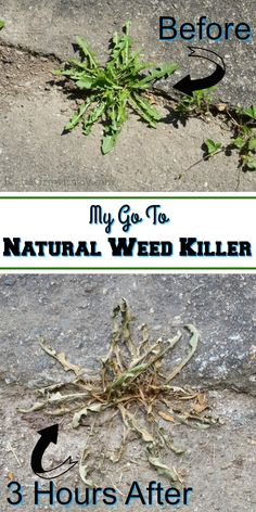Natural Weed Killer – Reuse Grow Enjoy Natural Weed Killer – Reuse Grow Enjoy,DIY Did you know there are things you can use as a natural weed killer? I am going to share my. Fertilizer For Plants, Organic Gardening, Backyard Flowers, Plants, Fertilizer, Country Garden Decor, Nature, Natural Plant Fertilizer, Gardening Tips