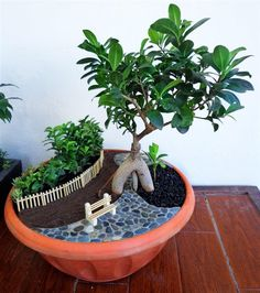 The Miniature and Fairy Garden Entries from the Great Annual Miniature Garden Contest, Part 6 of 6 – The Mini Garden Guru miniature garden The Miniature and Fairy Garden Entries from the Great Annual Miniature Garden Contest, Part 6 of 6 Indoor Fairy Gardens, Miniature Fairy Gardens, Garden Deco, Balcony Garden, Indoor Balcony, Pot Jardin, Little Gardens, Mini Fairy Garden, Succulent Gardening