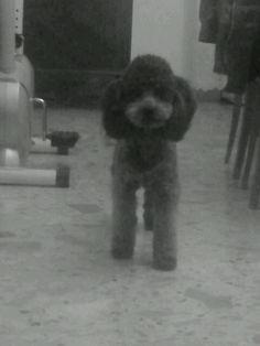 my little cutest dog! ;)  i love he