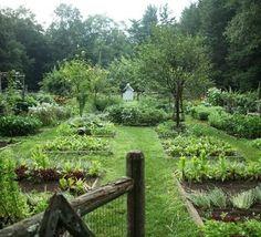 kitchen garden with fruit trees
