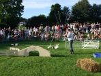 Sheepdog display