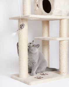 Buy scratching post: what should you pay attention to when buying a scratching post? The possibility Scratching Post, Cat Lover, Woodworking, Diy, Pay Attention, Stuff To Buy, Toothbrush Holder, Pets, Home Decor