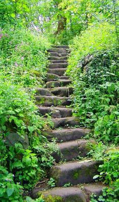 An ancient stair twisted through the greenery.