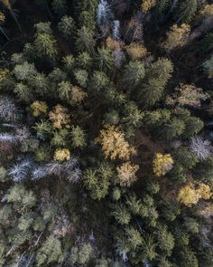 Let´s uncover the truth behind president Donald Trump´s remark that California should rake it´s forrests like Finland does. Does it make any sense? Read my post about Finnish forrests. Drone Photography, Finland, Donald Trump, California, Places, Wall, Donald Tramp, Walls, Lugares