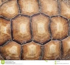textuur schildpad - Google zoeken