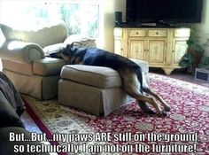 Leave it to a German Shepherd to be so clever... #humor #funny But... But... My paws ARE still on the ground