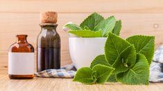 DIY přírodní léky z léčivých rostlin proti kašli, rýmě, chřipce a nachlazení.Sirupy z rýmovníku, česneku, bezu černého, meduňky, tymiánu, divizny a mateřídoušky Cactus Plants, Crockpot, Pesto, Homemade, Healthy, Cookies, Natural, Garden, Fitness