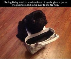 Funny Animals Caught Red Handed – 38 Pics